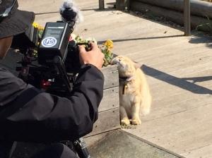 NHK総合静岡「岩合光昭の世界ネコ歩き」放送