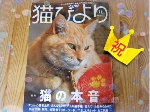 「猫びより11月号」の表紙はねこ店長です!